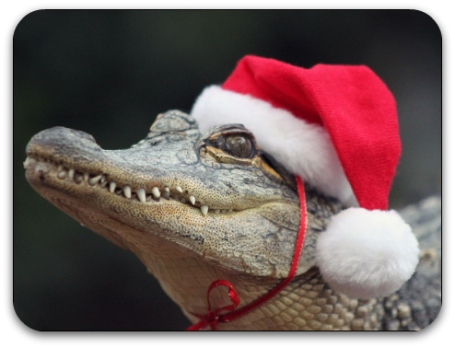 101223112645_christmas_animals_466x350_caters_nocredit