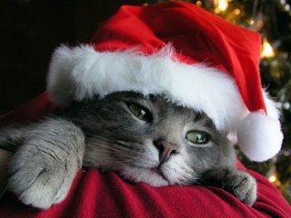 Gato+Pai+Natal