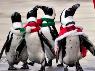 japao-pinguins-vestidos-natal1