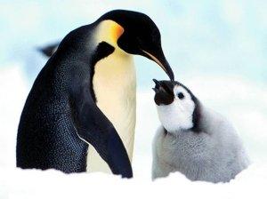 pinguim--pais_7585_1024x768