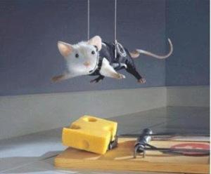 ratos1